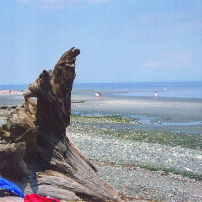 Driftwood at French Beach, near Victoria, Vancouver Island, Canada