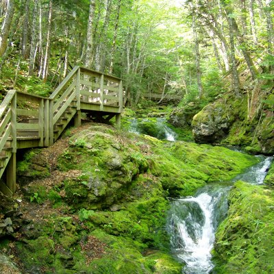 Dickson Falls hiking trail. Fundy National Park of Canada, New Brunswick. Photo taken in July 2004 by myself, Danielle Langlois.