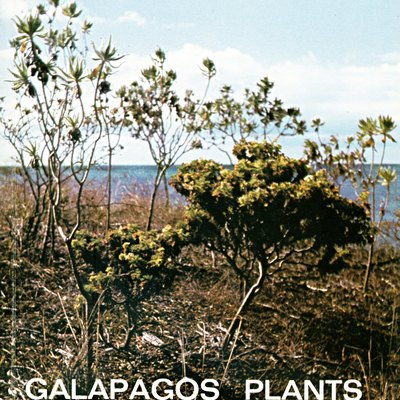 Drawings an descriptions of plants common on Galapagos. Complete scan of the book