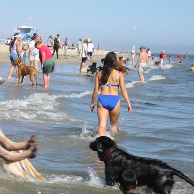 Rosie S Dog Beach Is The 3 Acre Off Leash In Belmont Area Of Long California Only All La County