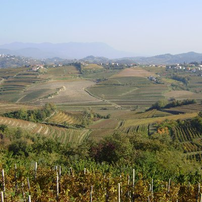 Submediterranean Slovenia: vineyards in the Gorizia Hills