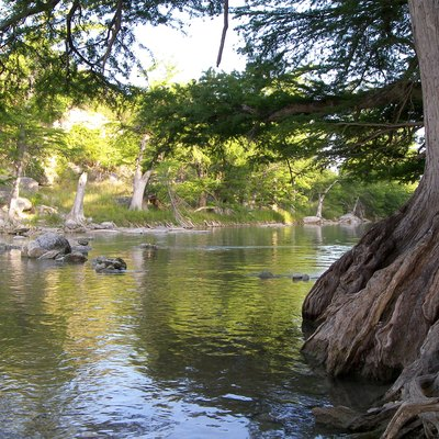 Baldcypress Trees On The Banks Of The Guadalupe River In Guadalupe River State Park Of Texas, United States.