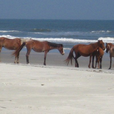Cumberland Island Horses On A Beach Of Cumberland Island, Georgia.