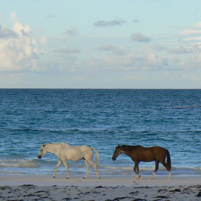 Images Related To Harbour Island Bahamas Horses On Pink Sand Beach