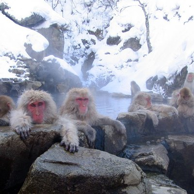 Japanese Macaques (Macaca Fuscata). Jigokudani Hot Spring, Nagano Prefecture, Japan. Monkeys Taking A Bath In Those Springs Are Famous. Image Taken In February 14, 2005.