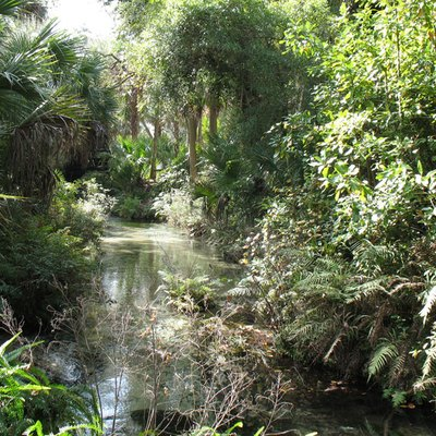 Juniper Springs, Ocala National Forest, 2007. Photo by Michael Messina.