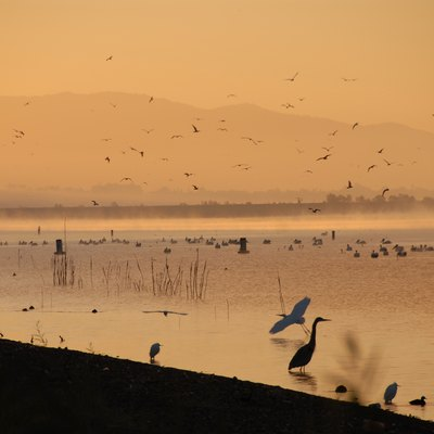 Herons on Lake Elsinore one December morning. Taken with a D200.