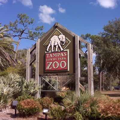 Images Related To Lowry Park Zoo