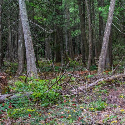 Just one of Mackinac Island's many extensive, deep forests.