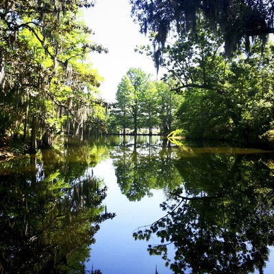 The still and mirrorlike reflecting pool flanked by cooling pines and other tall, shady trees along the walks of the formal gardens of Magnolia Plantation and Gardens.