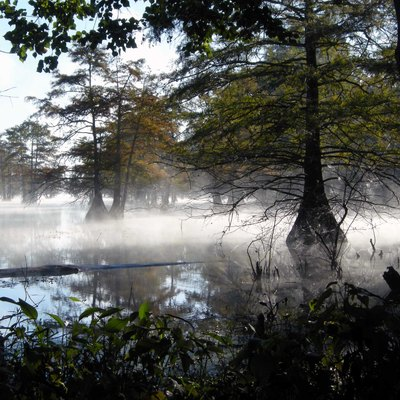 Morning mist on Steinhagen Reservoir, Martin Dies Jr. State Park, Texas