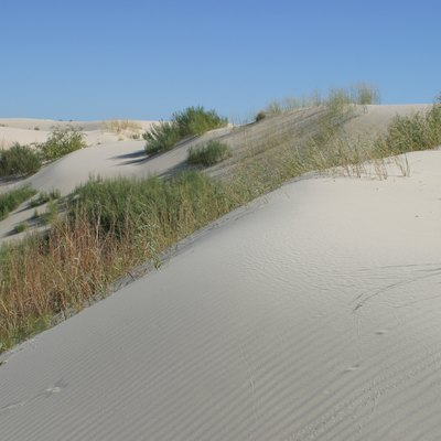 The light-colored sands of Monahans Sandhills State Park, Texas