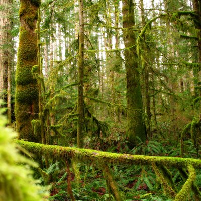 Forest on Vancouver Island BC Canada in winter near the ocean. Post processed with a positive contrast mask in