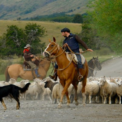 Gauchos mustering sheep in Patagonia (Argentina).