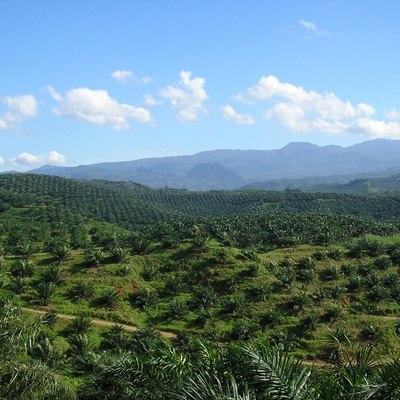 Vast palm oil plantation in Indonesia. Currently, Indonesia is the world's largest producer of palm oil.