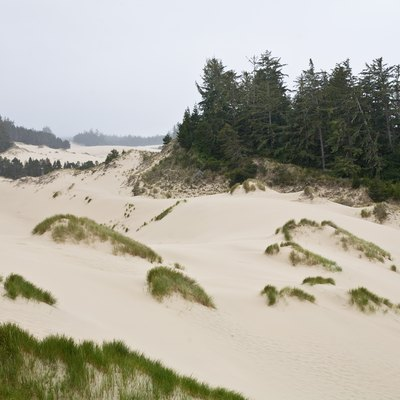 The Oregon Dunes National Recreaton Area near Florence, Oregon.