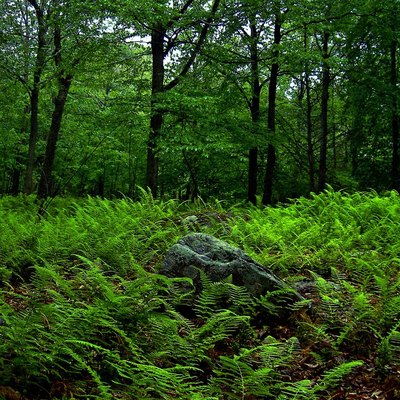 Rain-soaked undergrowth, Promised Land State Park, Pike County.