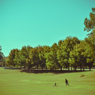 Meadow in Piedmont Park