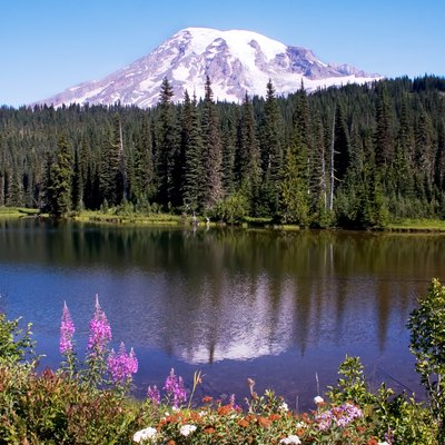 Pet Friendly Hotels Around Mt. Rainier | USA Today