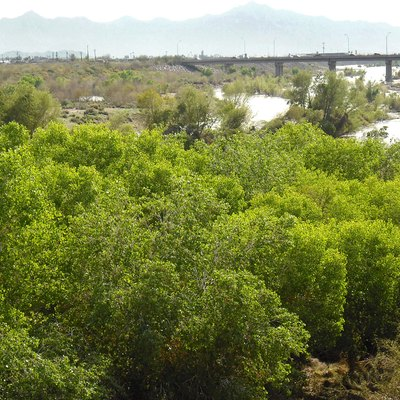The Rio Salado (Salt River) after 2010 winter rains; portion passing below the Central Avenue bridge in Phoenix, AZ.