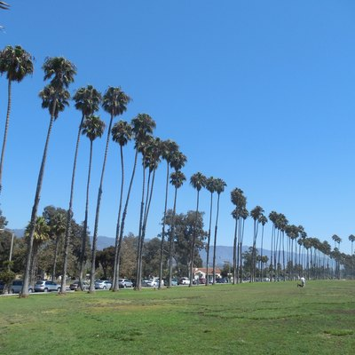 Palms along East Beach, parallel to East Cabrillo Blvd. in Santa Barbara, California