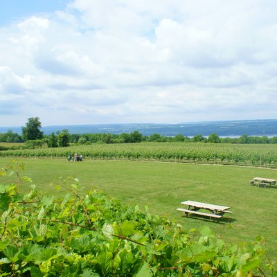 Vineyards in the Seneca Lake AVA, viewed from the back porch of Wagner Vineyards