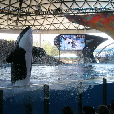 This is a picture of the Shamu show at Sea World San Antonio, taken on March 14, 2013.