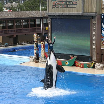 Shamu at SeaWorld Orlando lifting a trainer out of the water