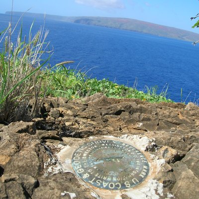 Sida fallax (Habit View benchmark, Molokini islet, Maui County, Hawaii