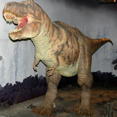 A reconstruction of Tyrannosaurus at Natural History Museum