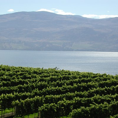 Vineyards at Lake Okanagan in British Columbia Canada