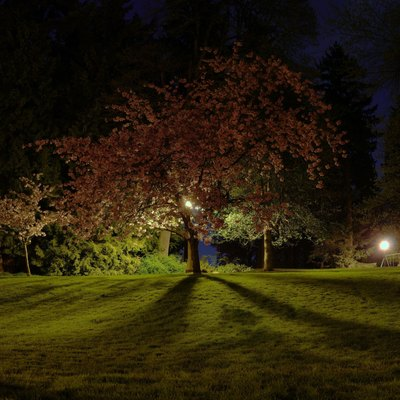 Panorama of 30 second exposures of Washington Park in Portland, Oregon.