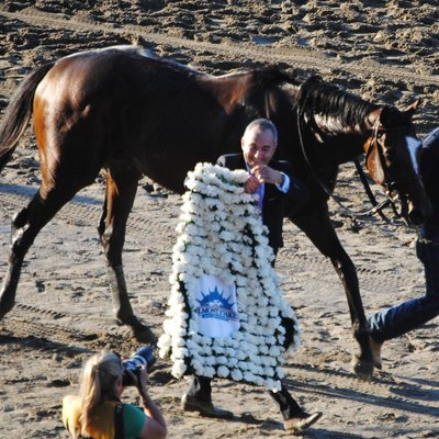 Tonalist in 2014 with the winners blanket for the Belmont Stakes, made of white carnations