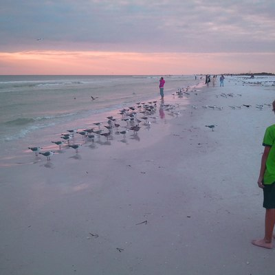 Young boy watching the seabirds along the shore, on Siesta Beach (Siesta Key), at sunset; taken with smartphone on an unusually cold, windy winter day.