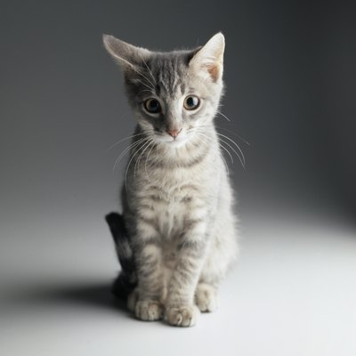 You may not detect any behavioral changes in your neutered kitten.