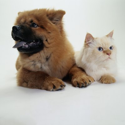 Puppies and kittens can be pals.