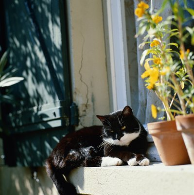 The soil in potted plants is tempting to cats.