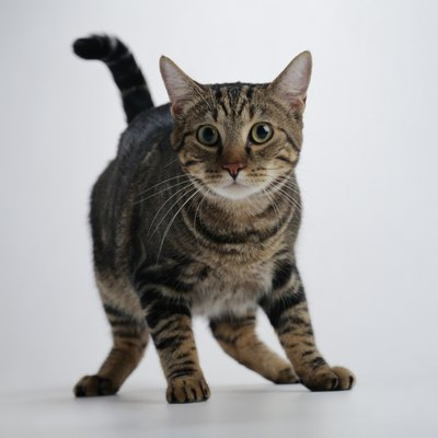 Submissive urination is less common in cats than dogs, but it's still an issue.