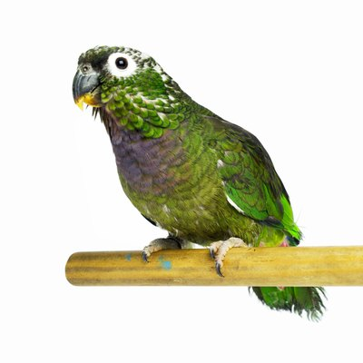 Small- and medium-sized parrots are ideal starter birds for beginners.