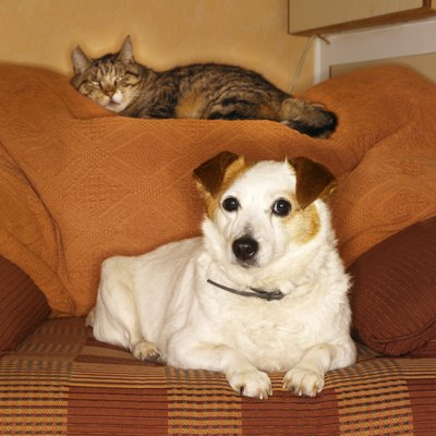First impressions between a cat and a dog are important.
