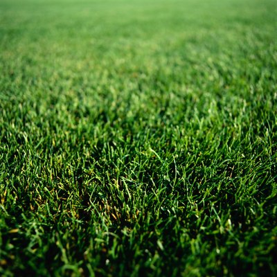 The trick to creating lush, green lawns is laying sod.