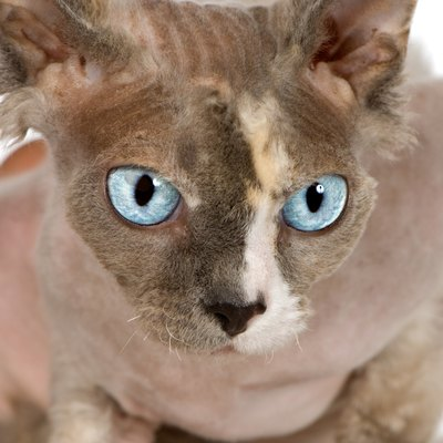 Even hairless cats have dander.