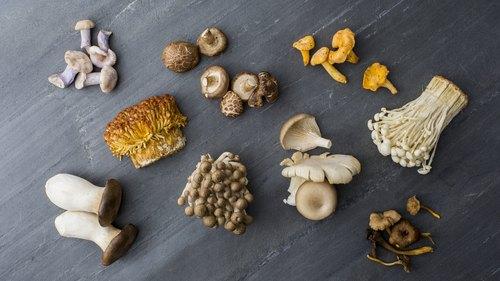 List of Gourmet Mushrooms