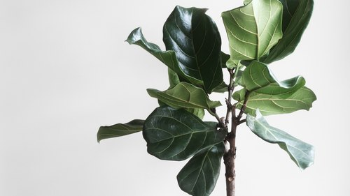 Indoor Plants That Can Actually Clean Your Air