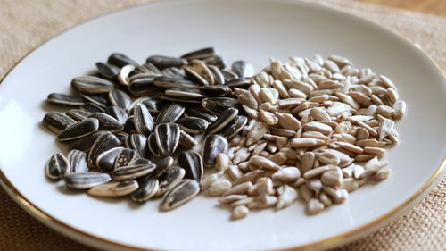 How to Sprout Sunflower Seeds