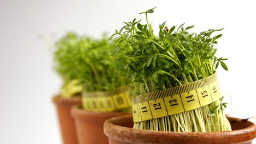 <p>B12 injections for weight loss? Try a healthy diet instead.</p>