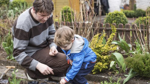 <p>Father and son planting vegetables in their garden</p>