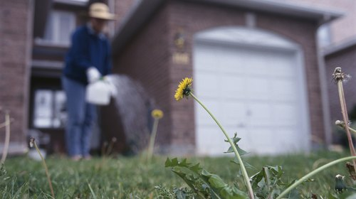 <p>Weeds create seeds which can spread throughout your yard.</p>