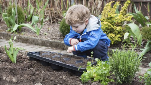 <p>Young boy looks over recently planted vegetable garden</p>