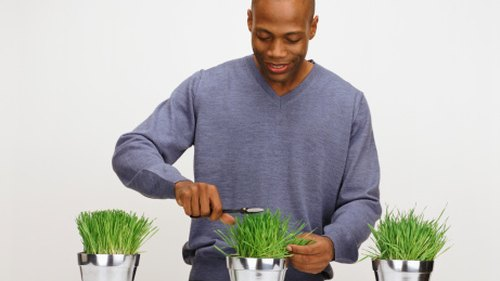 <p>You can cut blades of your wheatgrass to juice.</p>